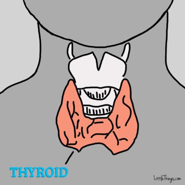 thyroid-600x600